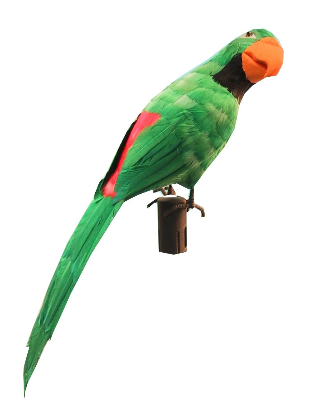 Papagaai mt. 50 cm-0