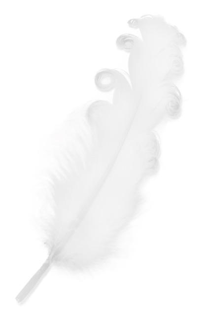 Veren krul 10/15 cm 50 x wit-0