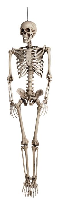 Skelet-0