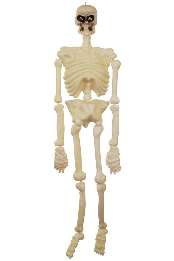 Skelet 150 cm 1