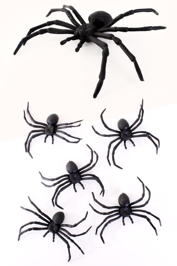 5 spinnen 10cm in z.b