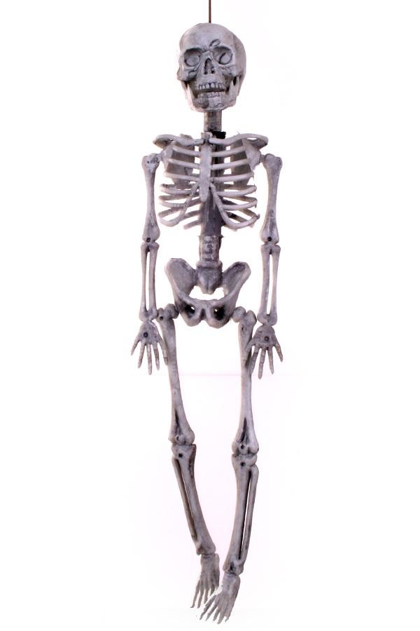 Skelet hangend 40×11 cm